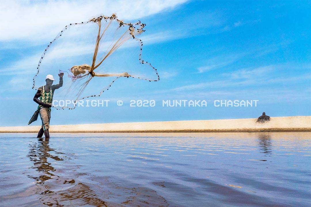Fisherman in Ghana casts a net over a lagoon. Amisa Lagoon, Ghana. Copyright © 2020 Muntaka Chasant