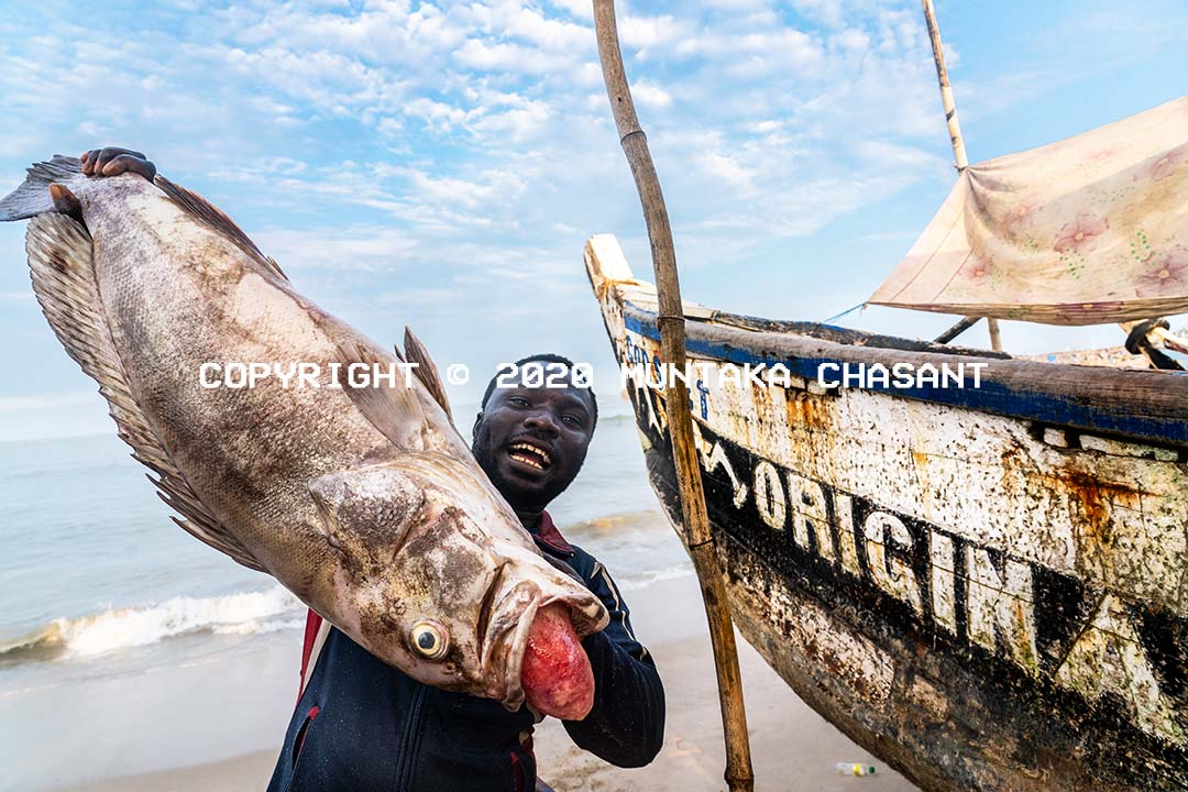 Fishing in Ghana: Fisherman in Accra, Ghana, displays his 40-inch freshly caught grouper fish with barotrauma. Copyright © 2020 Muntaka Chasant