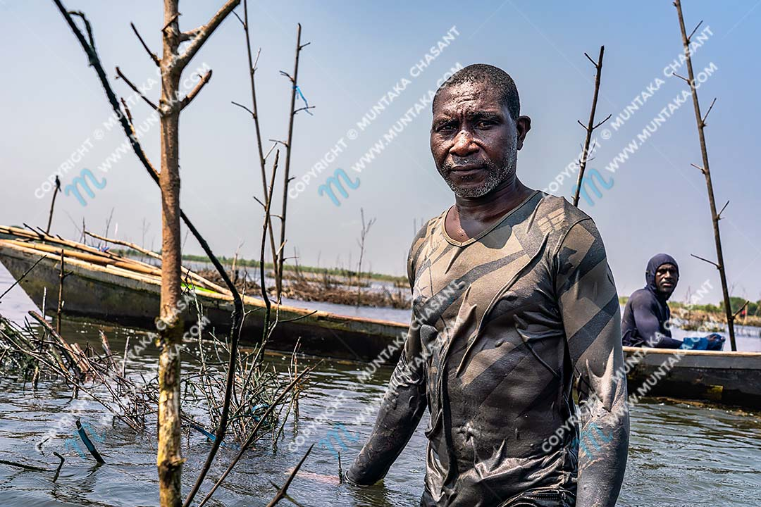 Tilapia fishing in Ghana: Joseph Akagbo (front) and Selassie Tsetsogbi (back) are Atidza/Acadja Blackchin Tilapia (Sarotherodon melanotheron) fishermen. They use black mangrove woods to create brush shelters to enhance Blackchin Tilapia production in the Densu Delta in Accra, Ghana. Copyright © 2020 Muntaka Chasant