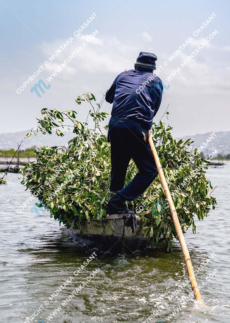 Fisherman transports felled black mangrove branches on an artisanal canoe over the Densu Delta in Ghana. Copyright © 2020 Muntaka Chasant