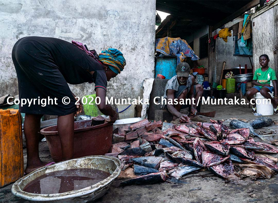 Processing yellowfin tuna in Ghana. Copyright © 2020 Muntaka Chasant