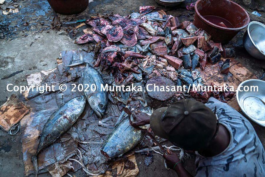 Fish processing in Ghana: Man process yellowfin tuna in Accra, Ghana. Copyright © 2020 Muntaka Chasant