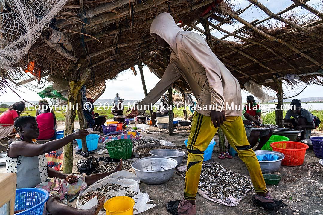 Fisheries in Ghana: Urban poor women process fish in Accra, Ghana. Copyright © 2020 Muntaka Chasant