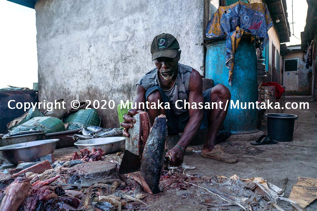 Fisheries in Ghana: Man process yellowfin tuna before smoking the meat over traditional kilns. Copyright © 2020 Muntaka Chasant