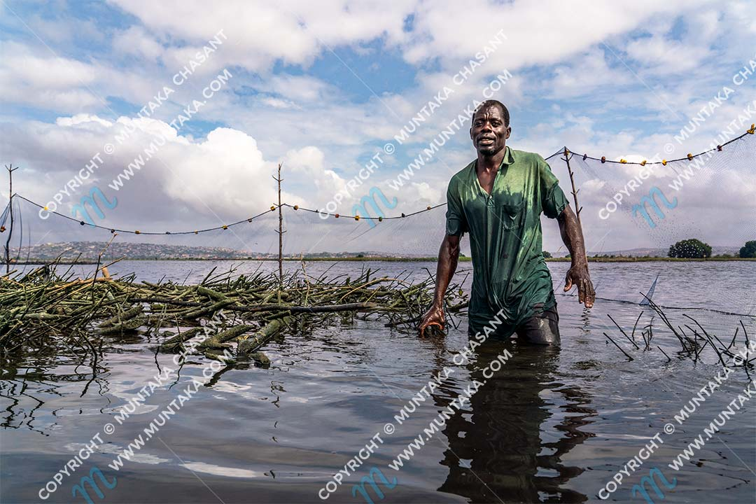 Fishing in Ghana: Fisherman attends to his brush park in the Densu River after 4 weeks. Copyright © 2020 Muntaka Chasant