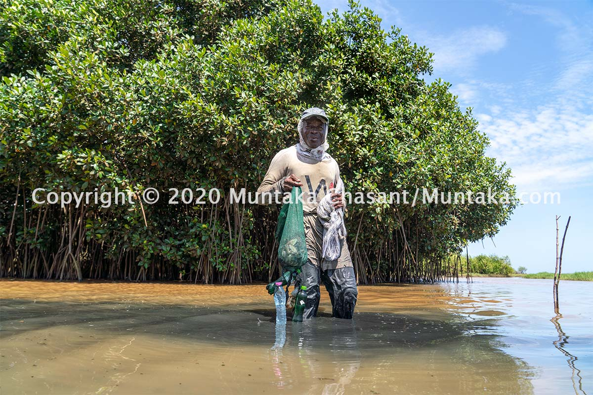 Fisherman displays his small catch after fishing for several hours. Mangroves serve as a home for a variety of fish species, but they are under threat. Copyright © 2020 Muntaka Chasant