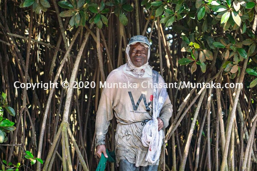 Fisherman in Ghana: 76 years old urban poor fisherman takes a rest under the shade of a mangrove tree (Rhizophora racemosa) in Accra, Ghana's capital city. Copyright © 2020 Muntaka Chasant