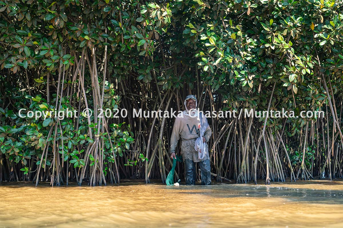 Older Ghanaian fisherman takes a rest under the shade of a mangrove tree while fishing. There were thousands of red mangroves around the Densu Delta. There are now only around 16 trees left standing. Copyright © 2020 Muntaka Chasant