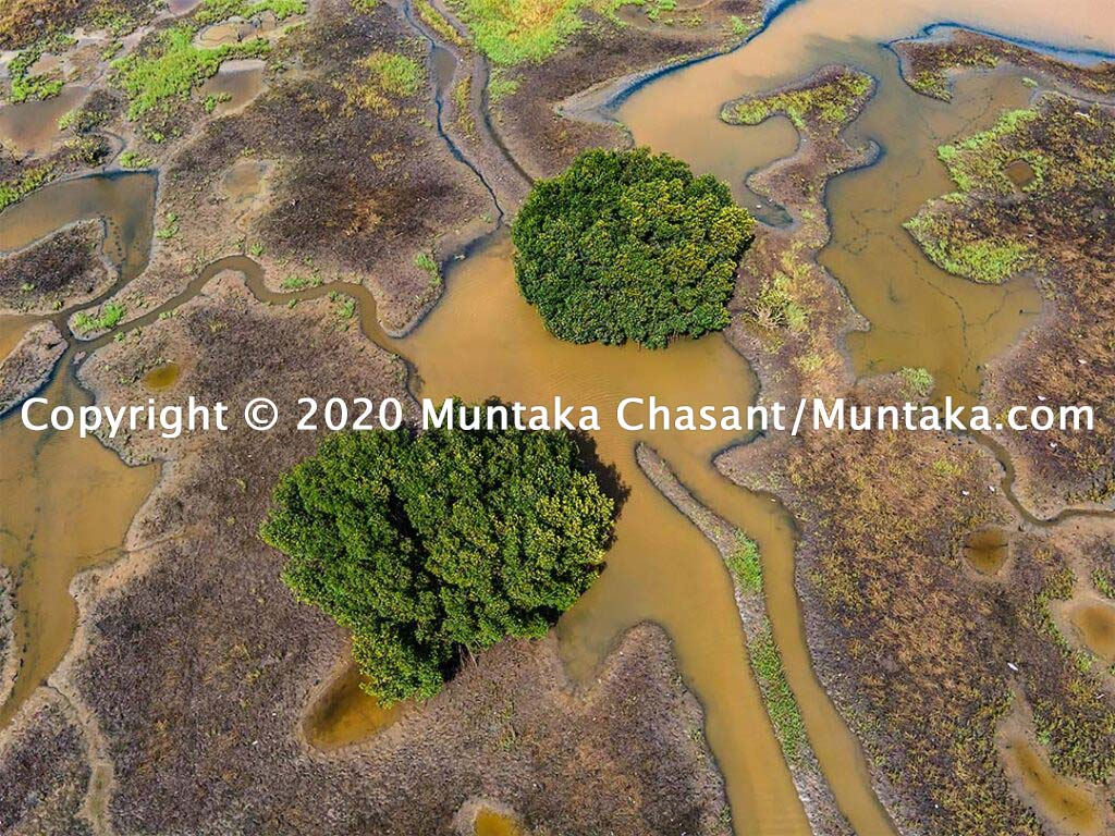 Mangroves and salt marshes. Copyright © 2020 Muntaka Chasant