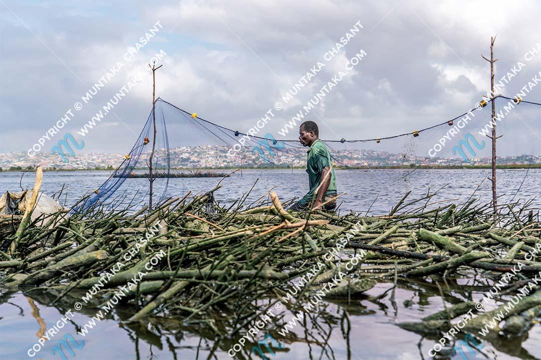 Methods of fishing in Ghana: Urban poor fisherman attends to his Atidza brush park in the Densu River in Accra, Ghana. Copyright © 2020 Muntaka Chasant