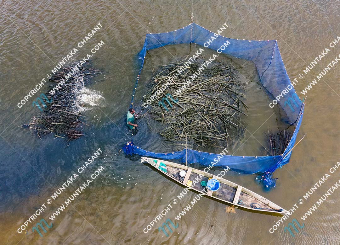 Fishing in Ghana: Fisherman in Ghana is removing brush piles and debris from a brush park in order to harvest blackchin tilapia. This trap is locally known as Atidza. Copyright © 2020 Muntaka Chasant