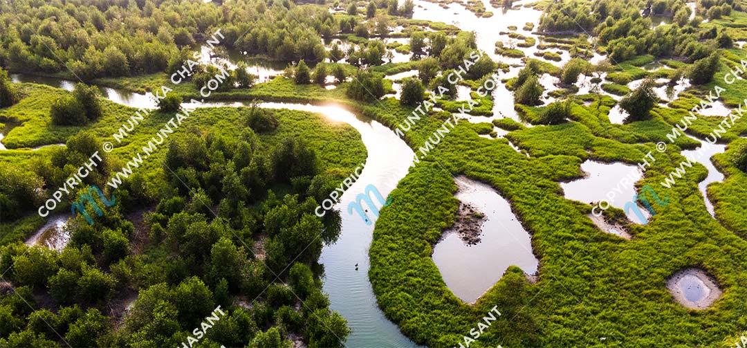 Salt marshes and mangroves. Copyright © 2020 Muntaka Chasant