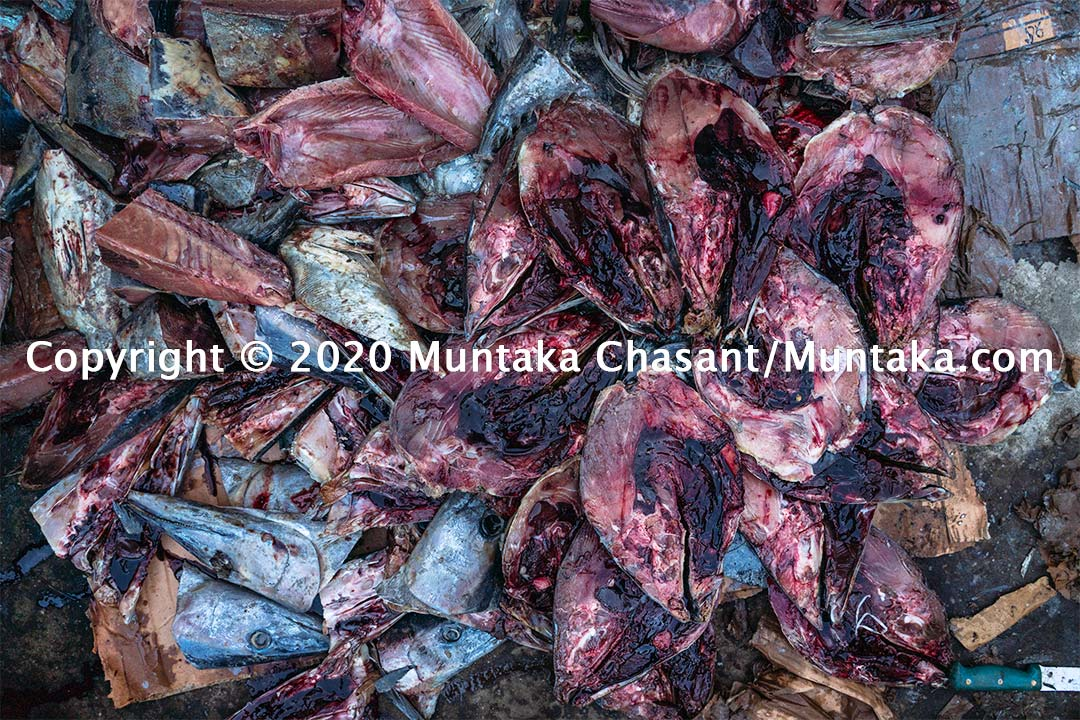 Processing yellow fin tuna. Copyright © 2020 Muntaka Chasant
