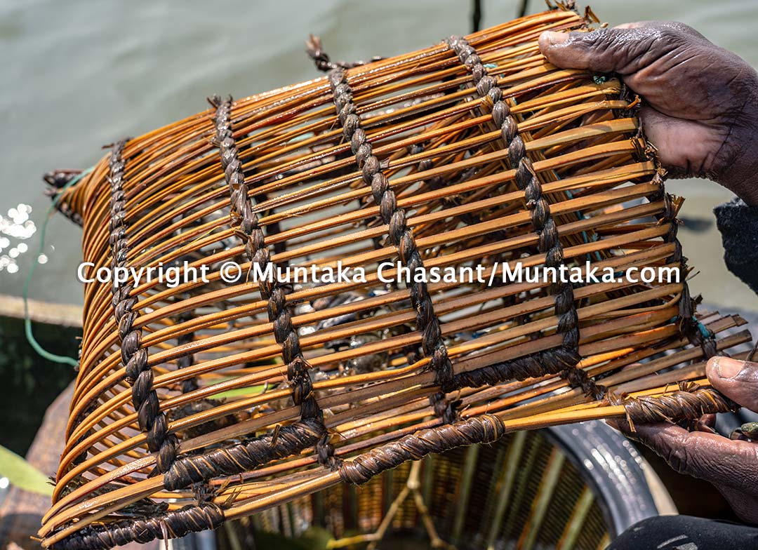 Hand-made blue crab trap. Copyright © Muntaka Chasant