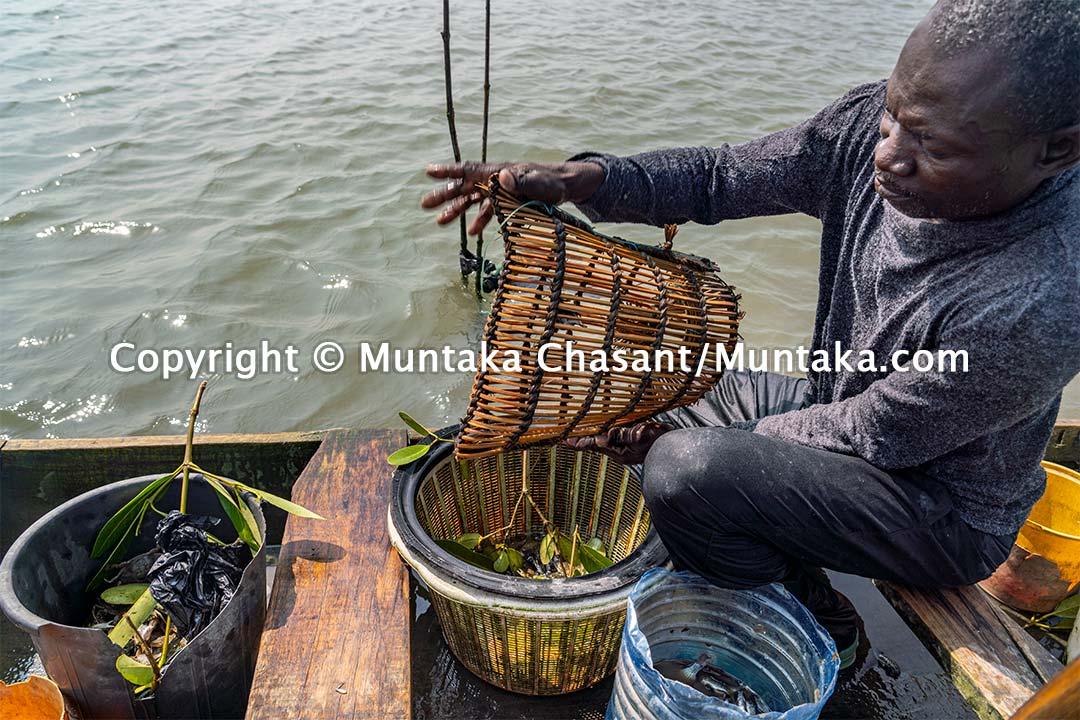 Blue crab fishing in Ghana. Copyright © Muntaka Chasant