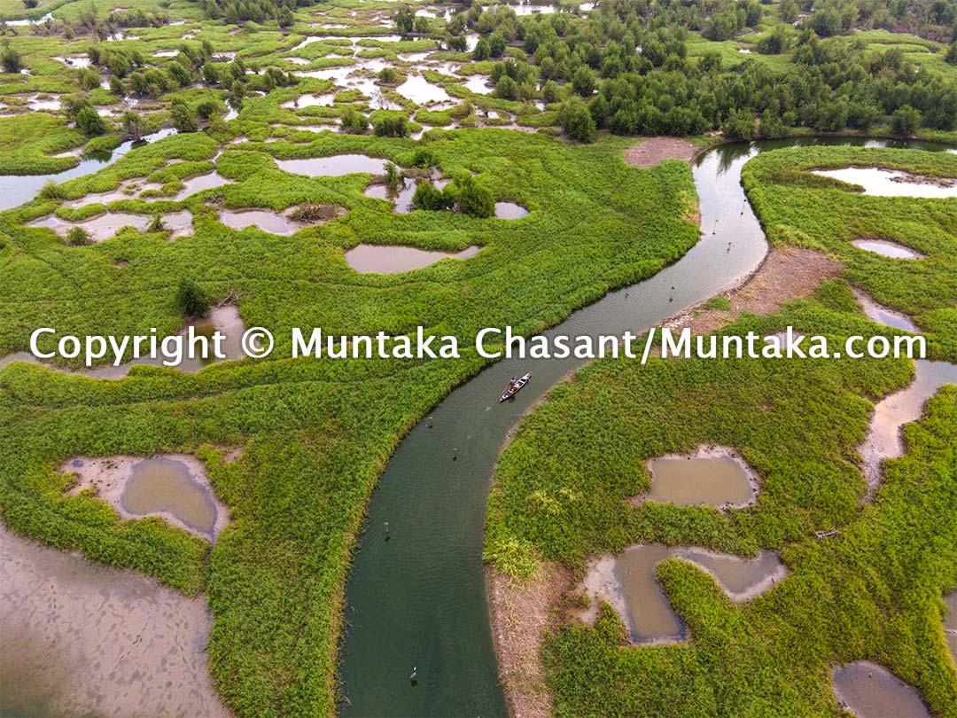 Productive mangrove and salt marsh in Ghana. Copyright © Muntaka Chasant