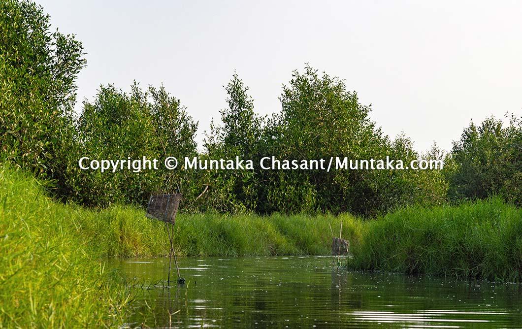 Mangroves and salt marsh. Copyright © Muntaka Chasant