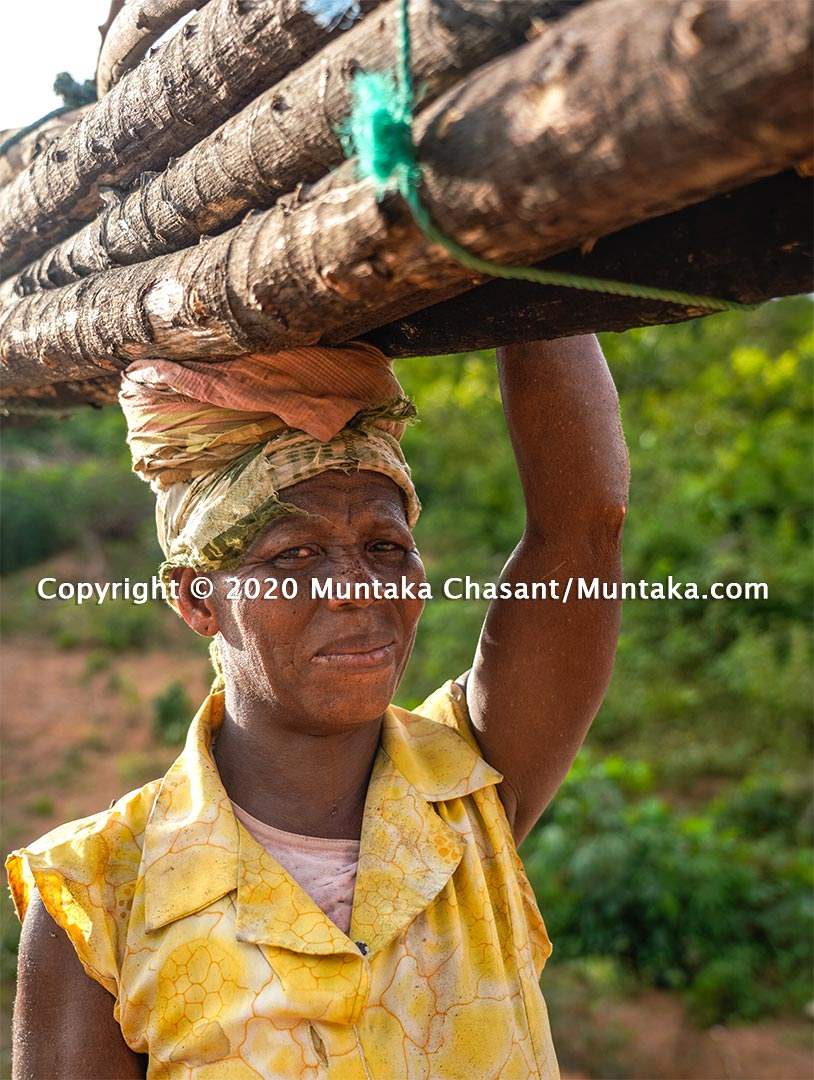 A rural poor woman carries fuelwood on her head in Ghana. Copyright © 2020 Muntaka Chasant