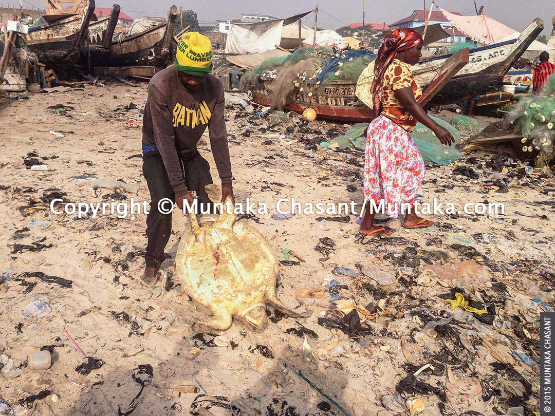 Fisherman drags a sea turtle across a fish landing site strewn with plastic bags in Accra, Ghana. Copyright © 2015 Muntaka Chasant