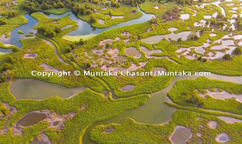 Endangered Wetlands