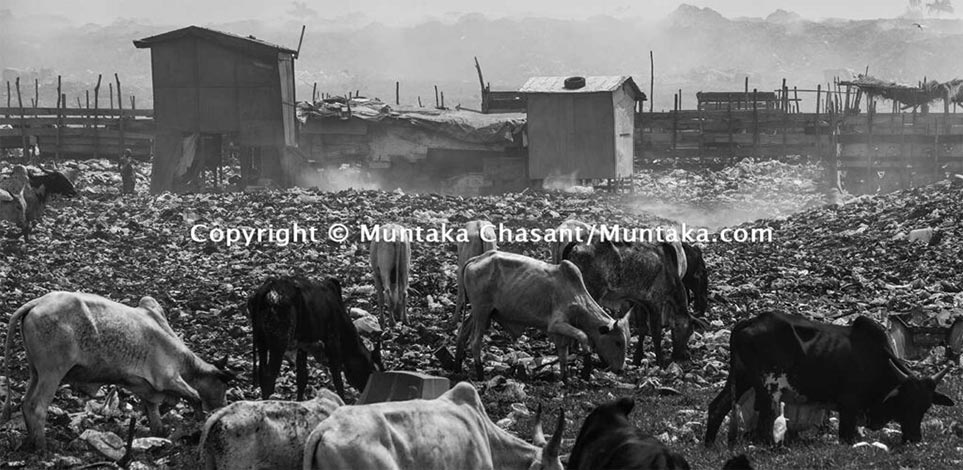 Polluted Urban Landscape