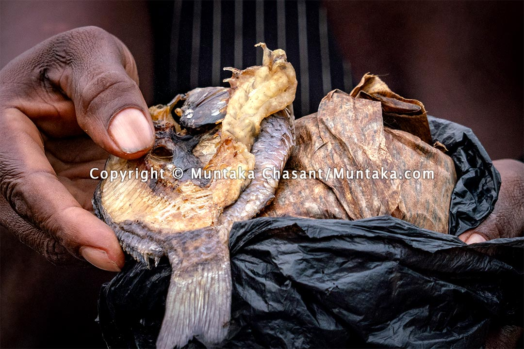 Fante Kenkey (steamed fermented corn dough) and a lightly roasted tilapia. Copyright © 2021 Muntaka Chasant
