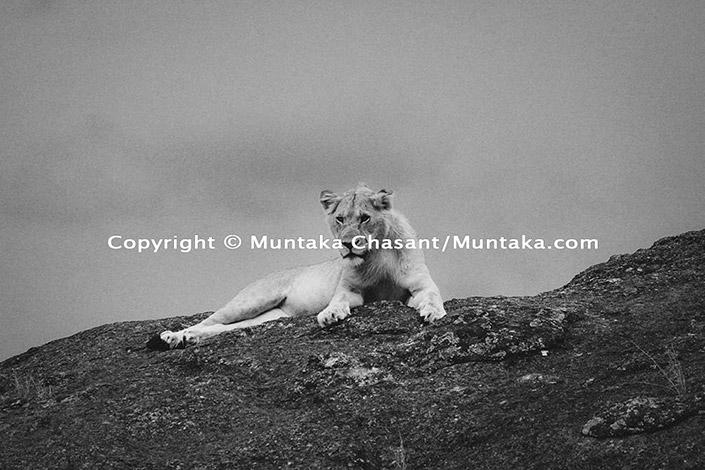 Lioness (film), Maasai Mara