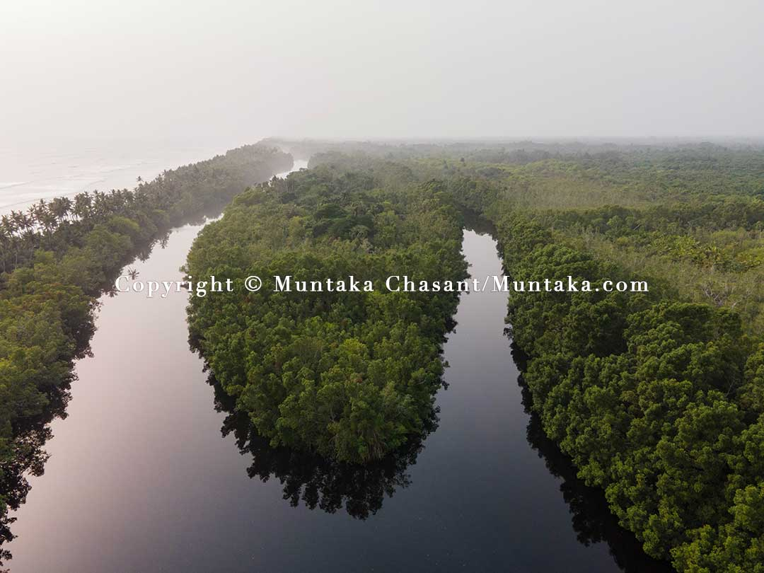 A thriving mangrove forest in the Amanzule lagoon in southwestern Ghana. Copyright © 2021 Muntaka Chasant