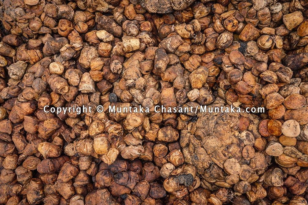 Natural rubber. Copyright © 2021 Muntaka Chasant
