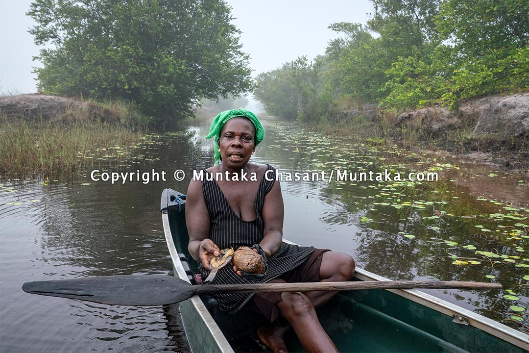 Rural poor woman shows her meal for the day as she heads to the farm — steamed fermented corn known and a few days old lightly roasted tilapia. Copyright © 2021 Muntaka Chasant