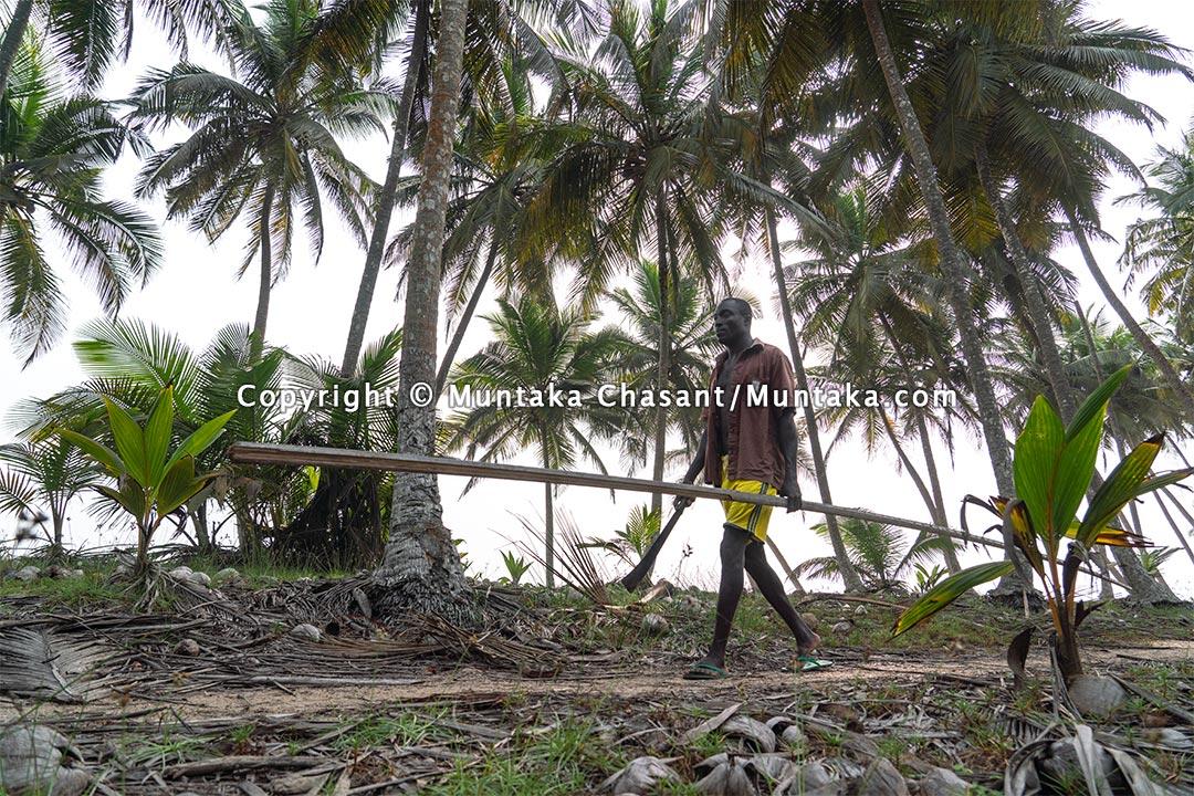 Man walks through coconut trees near the beach. Copyright © 2021 Muntaka Chasant