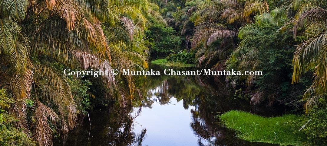 A tropical wetland. Copyright © Muntaka Chasant